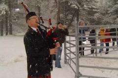 Uitzetten Schotse Hooglanders - 2